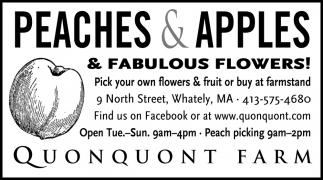 Peaches & Apples